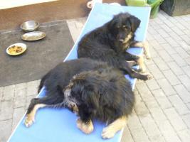 2 Hunde