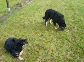 Foto 5 2 Hunde
