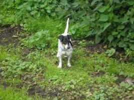 2 Jährige Terrier Mischling Hündin