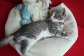 2 Kätzchen suchen ein liebevolles zuhause 13-15 Wochen jung