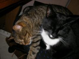 2 Katzen abzugeben