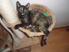 2 Katzenkinder (geb. März 2011) suchen ein neues Zuhause mit Freigang