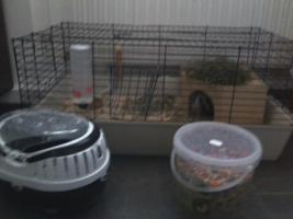 2 Meerschweinchen mit gr.Käfig und Zubehör