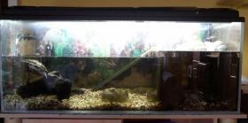 2 Mississippi Höckerschildkröten + Aquarium