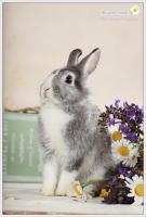Foto 5 2 Superliebe Kaninchenmädels suchen neue Möhrchengeber