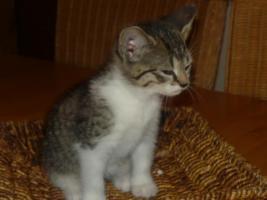 Foto 3 2 Whiskas Katzen suchen ein liebevolles Zuhause
