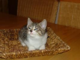 Foto 4 2 Whiskas Katzen suchen ein liebevolles Zuhause