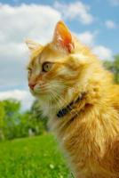 2 kastrierte Katzenbrüder (türkisch Angora) schweren Herzens abzugeben