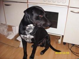 Foto 6 2 liebevolle Hunde dringend in liebevolle Hände abzugeben!!!