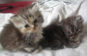 Foto 3 2 perser babys