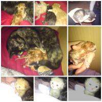 2 süsse katzenbabys zu verchenken