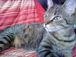 Foto 4 2 super süße Hauskatzen in liebevolle Hände abzugeben (zu verschenken)