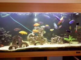 Foto 6 200 Liter Juwel Aquarium mit Unterschrank, Fischen und Zubehör!