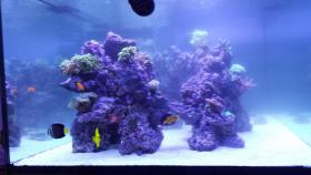 2000L Meerwasseraquarium