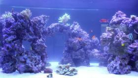 Foto 2 2000L Meerwasseraquarium