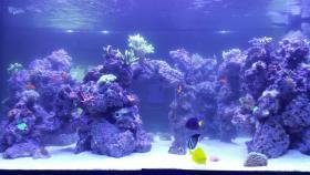 Foto 3 2000L Meerwasseraquarium