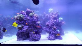 Foto 4 2000L Meerwasseraquarium