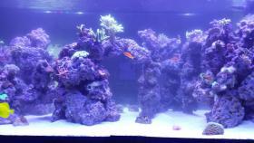 Foto 5 2000L Meerwasseraquarium