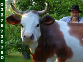 Foto 2 2017 und möcht dann ne Deko Kuh gern erwerben…?