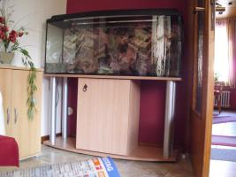 240 Liter Aquarium