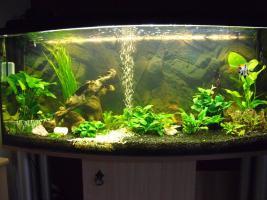 Foto 3 240 Liter Aquarium