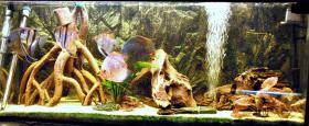 240L Aquarium 120x40x50 Diskusbecken KOMPLETT hochwertig!