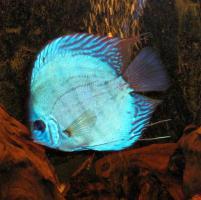 Foto 3 240L Aquarium 120x40x50 Diskusbecken KOMPLETT hochwertig!