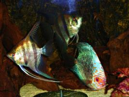 Foto 4 240L Aquarium 120x40x50 Diskusbecken KOMPLETT hochwertig!