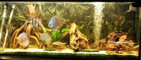 Foto 5 240L Aquarium 120x40x50 Diskusbecken KOMPLETT hochwertig!