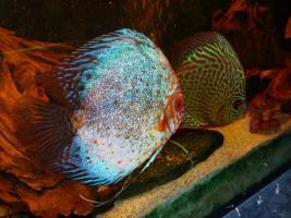 Foto 7 240L Aquarium 120x40x50 Diskusbecken KOMPLETT hochwertig!