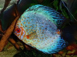 Foto 8 240L Aquarium 120x40x50 Diskusbecken KOMPLETT hochwertig!