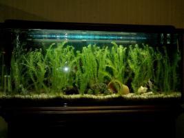 250 Liter Komplett Aquarium