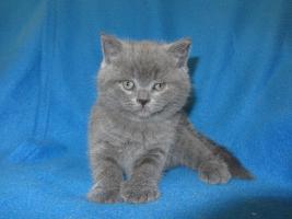 Foto 6 3 BKH Kitten