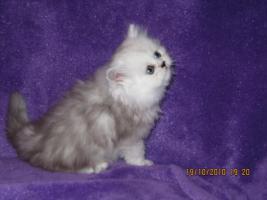 Foto 2 3 Perser Baby