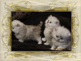 Foto 7 3 Perser Baby