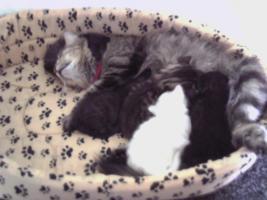 3 Süße Katzenbabys abzugeben