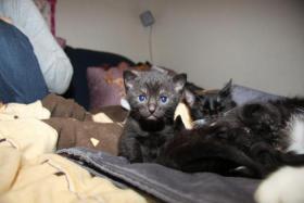 3 Süße Kitten suchen neues zuhause