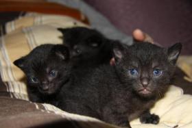 Foto 2 3 Süße Kitten suchen neues zuhause