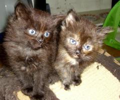 Foto 2 3 kleine Musketiere suchen kuschliges Zuhause