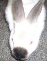 3 zuckersüße Kaninchen abzugeben