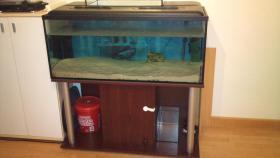 300 l Aquarium mit Unterschrank + Zubehör