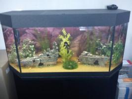 300L aquarium mit besatz