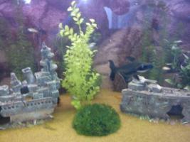 Foto 2 300L aquarium mit besatz
