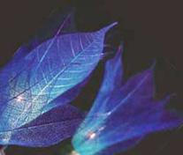 Foto 5 35x Blue Leaf Flower String Party, Patio, Wedding Light