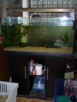 Foto 2 4 Axolotl mit voll eingerichtetem Aquarium unter Unterschrank