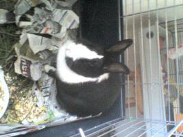 Foto 2 4 kaninchen suchen ein zuhause