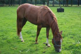 Foto 3 4jährigen Quarter Horse Wallach (Doc Chex Enkel) zu verkaufen