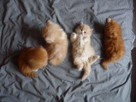 5 Katzen Babys