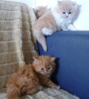 Foto 2 5 Katzen Babys