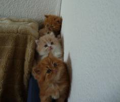 Foto 6 5 Katzen Babys
